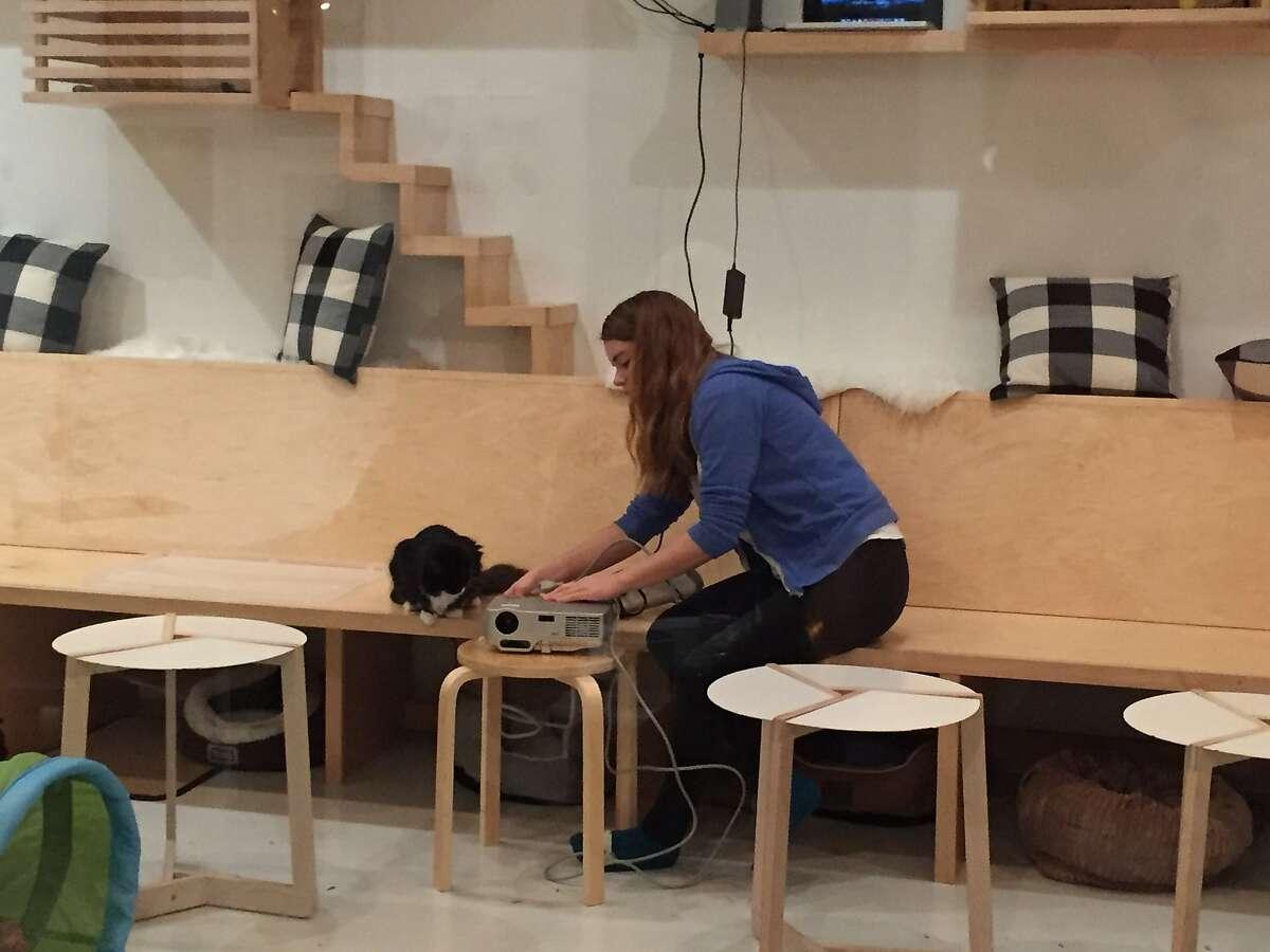Courtney Hatt is the �Chief Feline Officer� of�KitTea Cat Caf� in San Francisco.