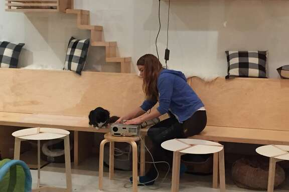 Courtney Hatt is the �Chief Feline Officer� of�KitTea Cat Caf� in San Francisco.