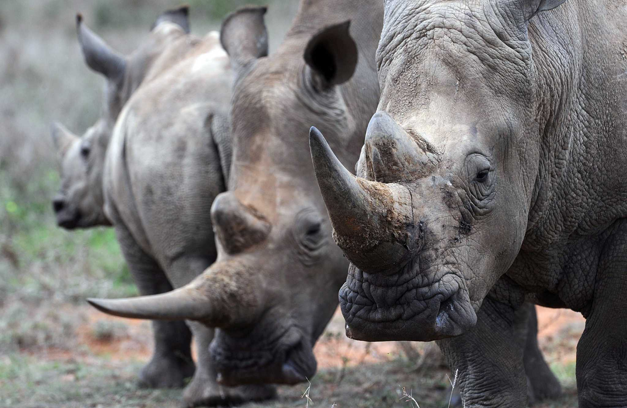 Missing trophies from safari prompt lawsuit