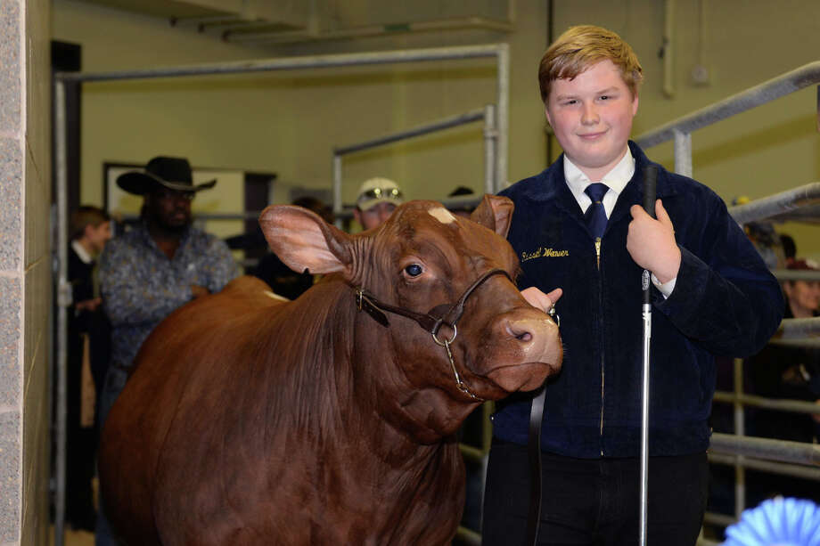 Cypress Woods High School sophomore Russell Weaver's Grand Champion Steer sold to Joe Myers Ford for $40,000. Photo: N/A