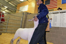 Cypress Falls High School sophomore Timothy Pace Jr. had the Grand Champion Lamb at the CFISD Livestock Show and Sale, which sold at auction to Joe Myers Ford for $12,500.