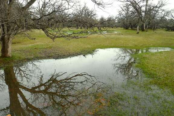 At Red Bank Ranch, located west of Red Bluff in the foothills of Tehama County in Northern California, heavy rain on top of saturated soils created pools of standing water at the ranch at throughout the foothills of Northern California. This will help increase in the carrying capacity of habitat and will mean more wildlife breeding success this spring.