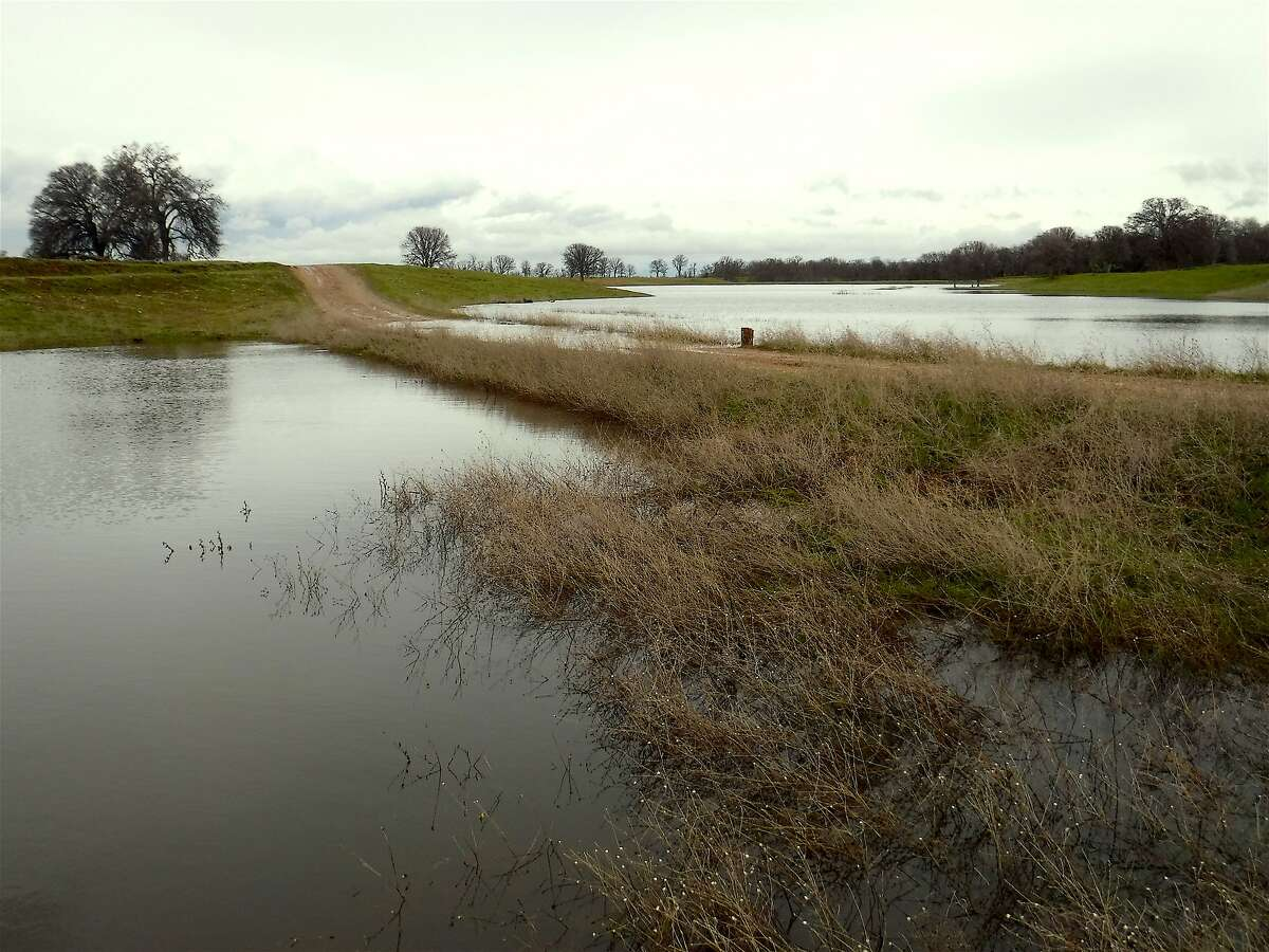 At Red Bank Ranch in the foothills of Northern California, the pond on the right flooded over the dirt road and created a new pond on the left . . . this helps increase the carrying capacity of habitat and will mean more wildlife breeding success this spring