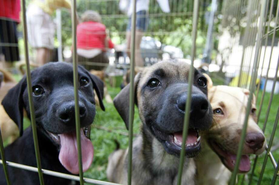 Whether you foster only one pet or foster many pets over your lifetime, animal shelters and rescue groups need people like you to help care for pets who need a little extra time before going to their new homes. Photo: Houston Chronicle File Photo / © 2008 Houston Chronicle