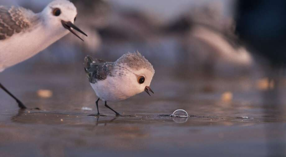 "A scene from the animated short ""Piper."" Photo: Pixar Animation Studios, Walt Disney Studios Motion Pictures"