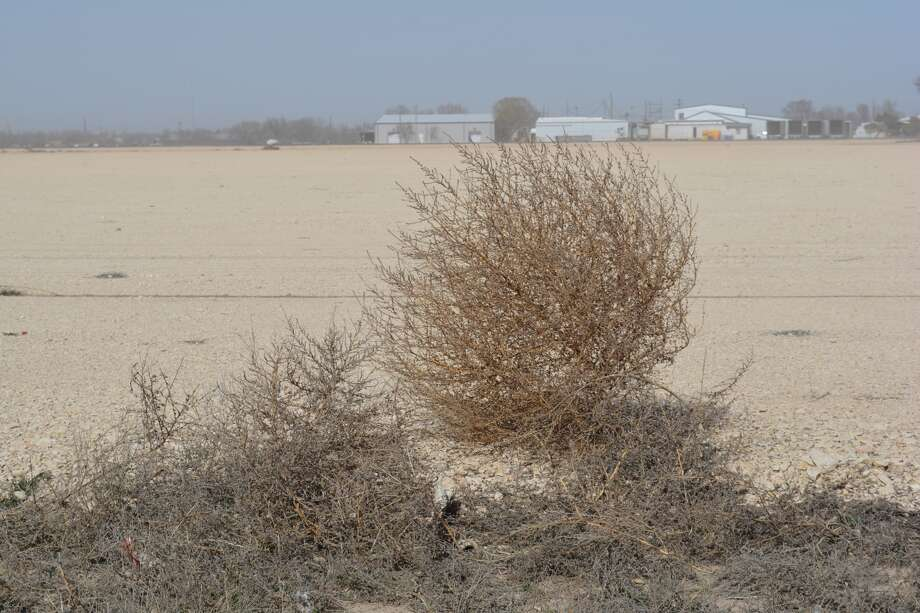 A Texas woman has gone viral after posting a video showing hundreds of tumbleweeds blowing across a Texas road on her Facebook.>> See weird, colorful terms used to describe the weather.