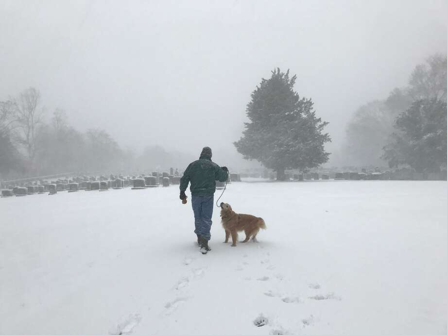 Snow or no snow, a dog takes a daily walk in Fairfield on Thursday, Feb. 9, 2017 Photo: Cathy Zuraw /Hearst Connecticut Media