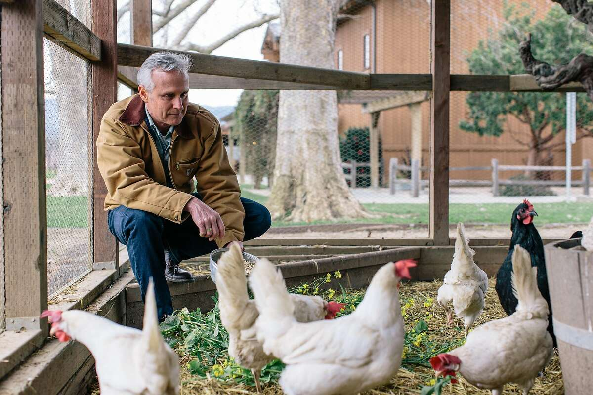 Robert Biale feeding the chickens on the grounds at Robert Biale Vineyards in Napa, California, on February 1, 2017.