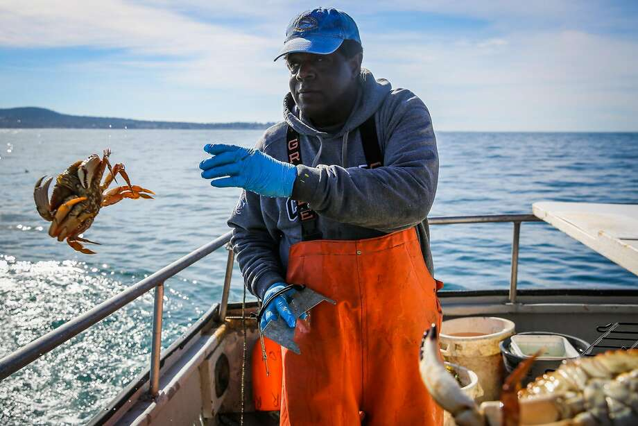 Truitt throws a female crab back into the ocean during a fishing and crabbing trip in Monterey Bay. Photo: Gabrielle Lurie, The Chronicle