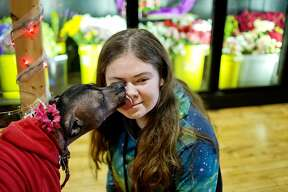 Julia Pichla, 15, gets a kiss from Ellie the dog as she sits at the puppy kissing booth on Saturday at the Lil' Pear Tree in downtown Midland. Patrons could support the Humane Society of Midland County by donating a dollar or more for a dog kiss. Dogs were on hand for smooches from 10 a.m. to 2 p.m.