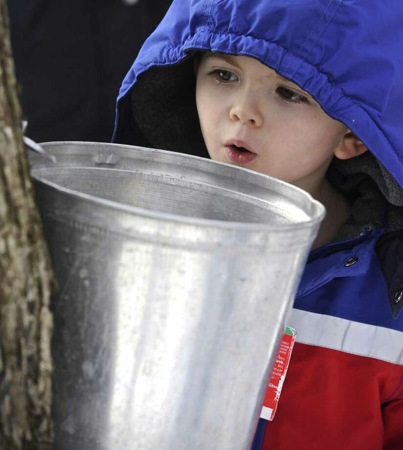 Noah Marty, 4, of Redding, watches and waits for maple tree sap to start to run down a spile during a backyard syruping event at New Pond Farm in Redding, Conn, on Saturday, February 11, 2017. Photo: H John Voorhees III / Hearst Connecticut Media / The News-Times