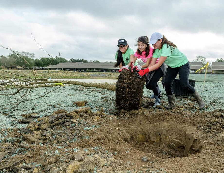 From left, Andrea Monsivais, 15, Janine Morales, 16, and Gloria Contreras, 17, help the Exploration Green Conservancy's effort to plant 60 mature, 45-gallon trees in the water authority's detention area development project.   Photo: ÂKim Christensen, Photographer / ©Kim Christensen