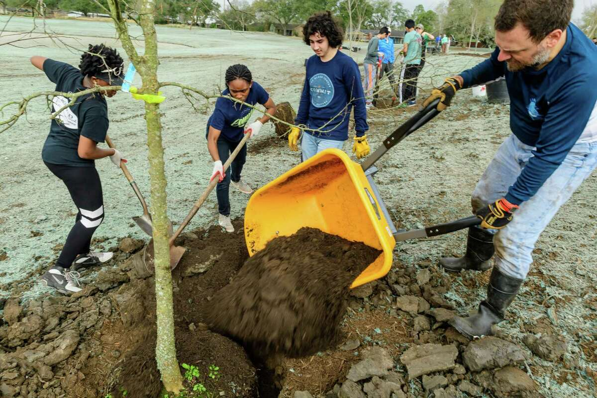 From left, Rachel Mgbeike, 17, Fesolami Akinwande, 18, Sherwin Nouri, 17, and Rich Sommer of Houston plant a tree at Exploration Green on Saturday. About 6,000 trees will be planted by the project's completion.