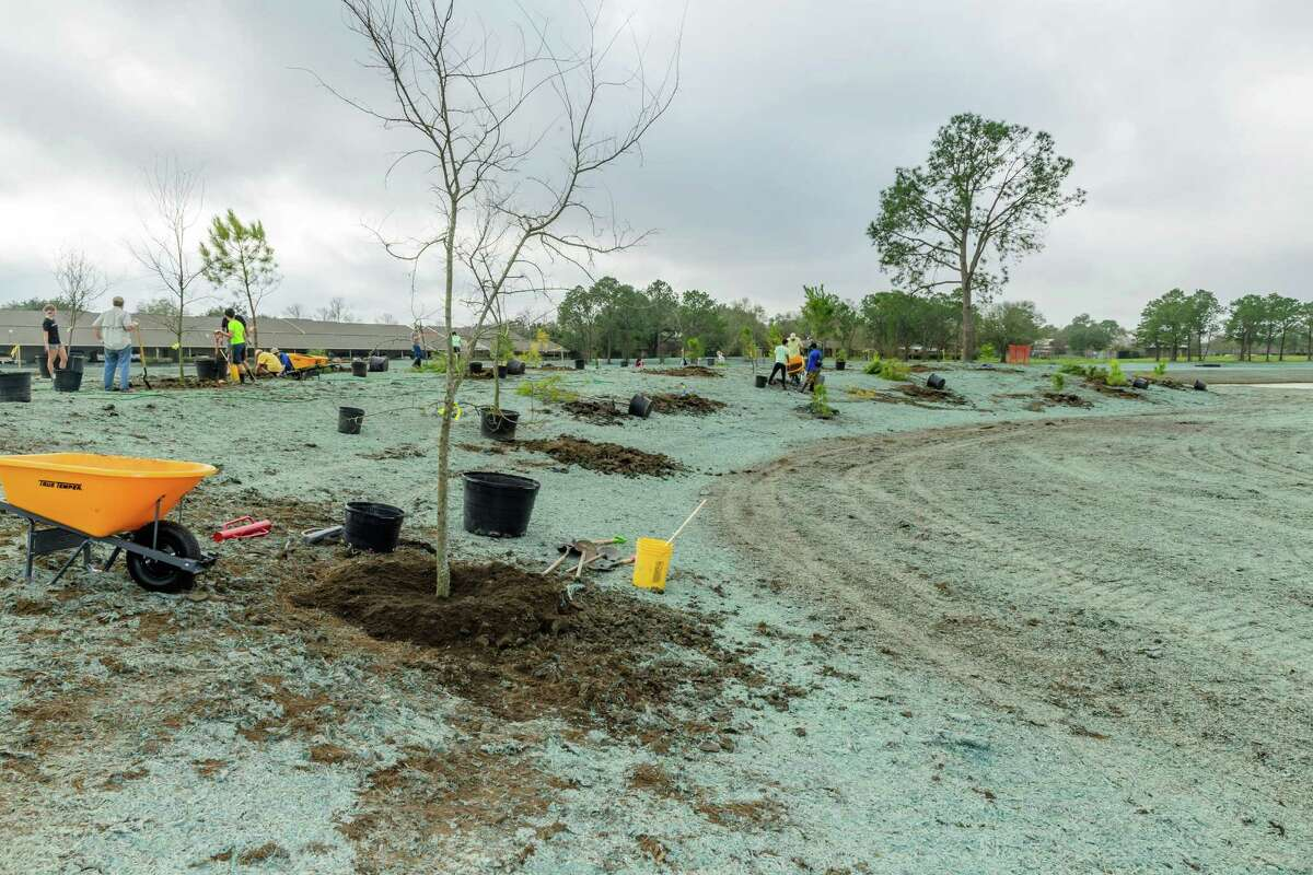 On Saturday, 60 mature trees were planted around the 14-acre detention/wetland area of Exploration Green.