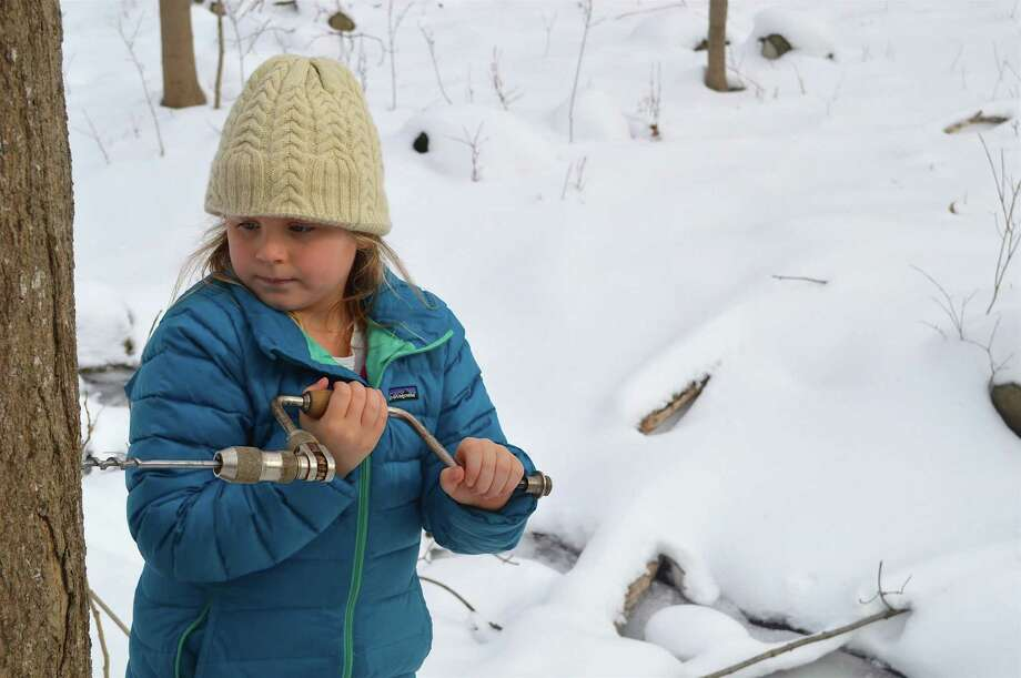 Alex Bell Lanier, 6, of Bedford, N.Y., drills for sap at the start of the Adopt-a-Tree maple syrup program at the New Canaan Nature Center, Saturday, Feb. 11, 2017, in New Canaan, Conn. Photo: Jarret Liotta / For Hearst Connecticut Media / Darien News Freelance