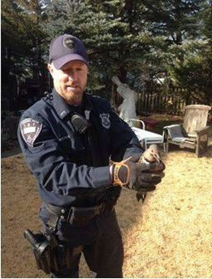Stamford police officer Chris Brown helped rescue a woodpecker that was trapped in a Unity Road basement. Photo: Contributed / Contributed