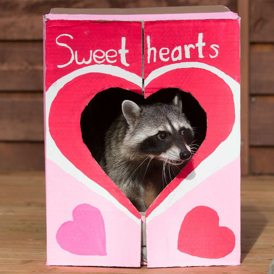 Click through the slideshow to see our top picks for Valentine's Day events for the entire family. Photo: Jeremy Dwyer-Lindgren/Woodland Park Zoo