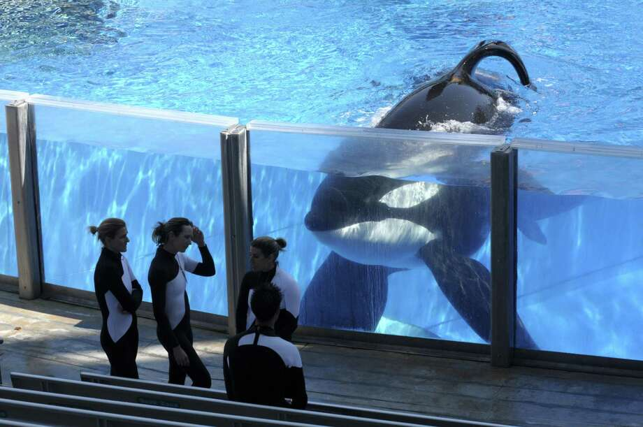 SeaWorld Entertainment Inc. posted a net loss of $11.9 million, or 14 cents a share, in the three month period ended Dec. 31, the company said Tuesday. Photo: Phelan M. Ebenhack /Associated Press / FR121174 AP