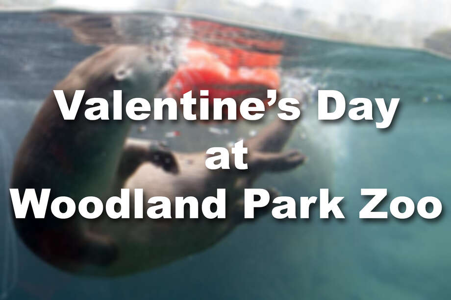 Woodland Park Zoo rewarded many of its critters this weekend with Valentine's Day-themed treats. Check out the highlights. Photo: Woodland Park Zoo
