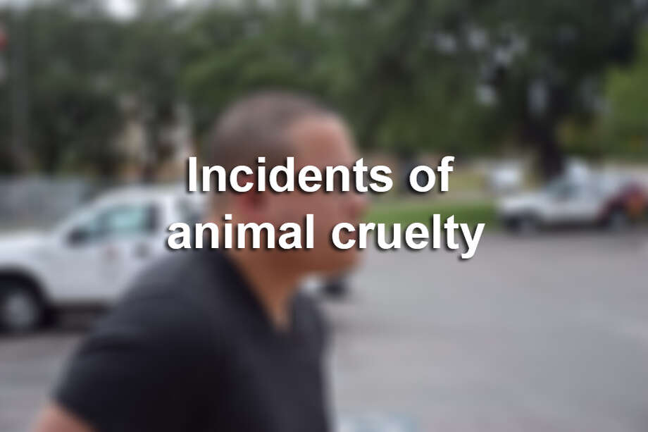 Animal cruelty incidents in the news. Photo: Mysa