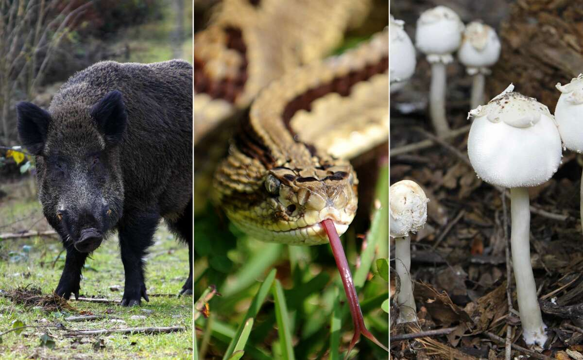 Surviving Texas Texas is the top state with animal-related deaths, between 1999 and 2013 the Lone Star State had356 animal-caused deaths. Click through to see how to face off against Texas' biggest animal and plant dangers.