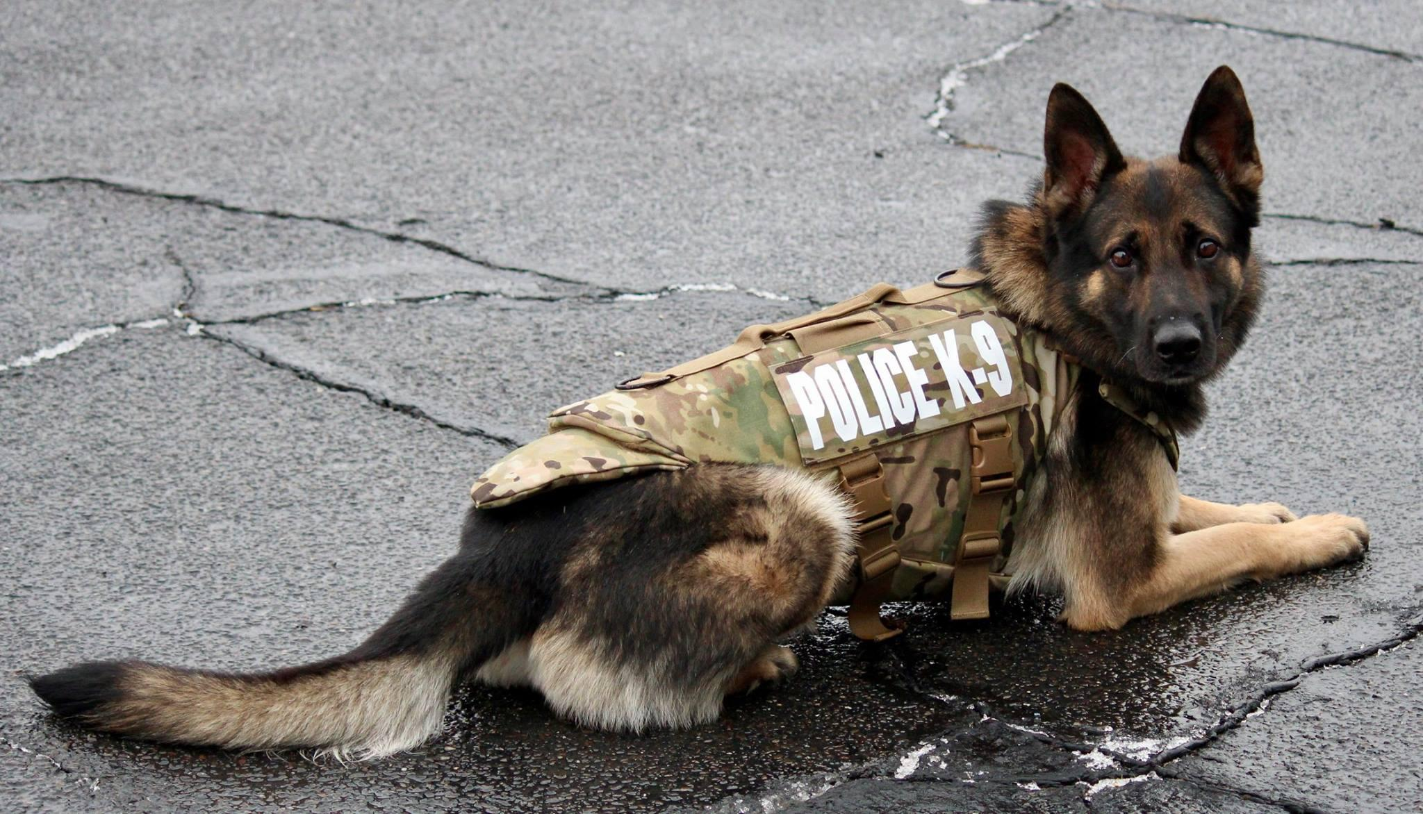 Monroe Police Dog Gets Body Armor Connecticut Post
