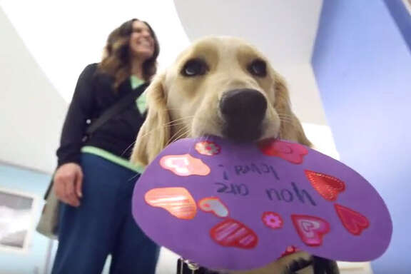Elsa, the full-time therapy dog at Texas Children's Hospital, delivers valentines to patients, Feb. 14, 2017. (Screen grab from YouTube video via Texas Children's Hospital)