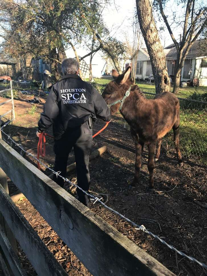 Two emaciated horses were seized Wednesday in Conroe.