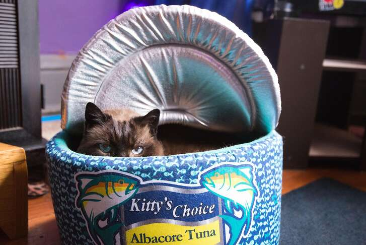 �It took him a while to notice that bed, now he's in there all the time.� Said Daniel �DQ� Quagliozzi of his cat, Cubby, who peered out from his cushioned tuna can on Feburary 1st, 2017 in San Francisco.  DQ runs a business called, GO CAT GO! Where he gives in-home as well as Skype consultations to cat owners across the world.