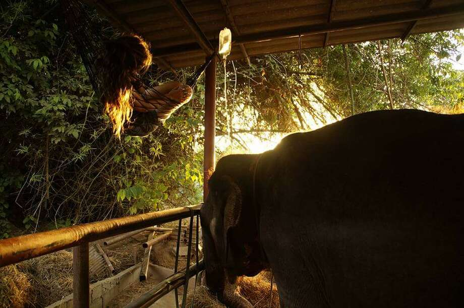 Victoria Duffield was planning to go to law school. After traveling, she began training as a mahout at ElephantsWorld in Thailand. Photo: Mary Lee Grant