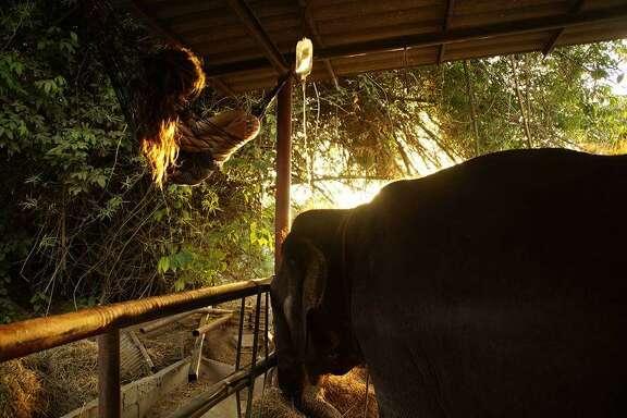 elephant world photos