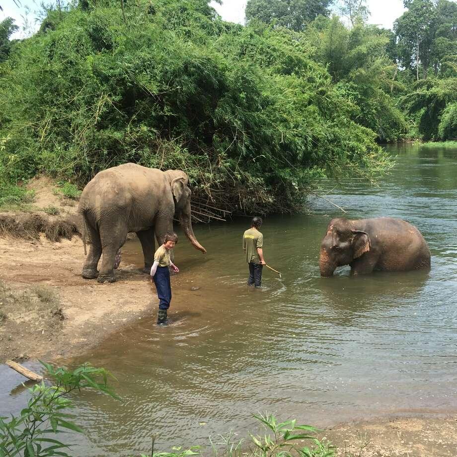 Jaeke at ElephantsWorld. Photo: Mary Lee Grant