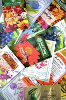 In Zone 9, it's time to plant seeds for spring flowers and vegetables.
