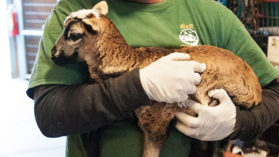Twenty-six neglected animals were rescued last week from a property in the unincorporated Monterey County community of Pajaro, officials with the Society for the Prevention of Cruelty to Animals for Monterey County said today. Photo: Monterey County SPCA