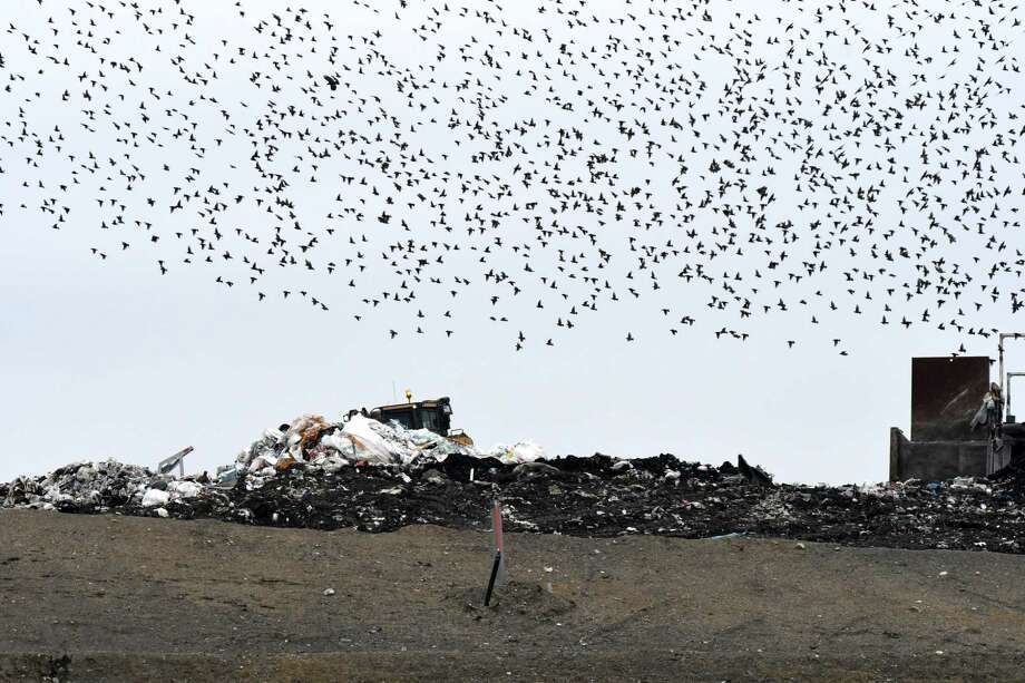 A flock of birds swarms above Colonie Landfill on Friday, Jan. 20, 2017, in Colonie, N.Y. (Will Waldron/Times Union) Photo: Will Waldron / 20039483A