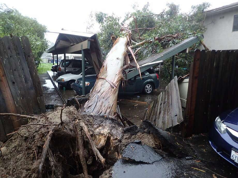 Strong winds and saturated soil in Goleta (Santa Barbara County) caused a eucalyptus tree to topple onto a residential parking area, damaging vehicles. Photo: Mike Eliason, Associated Press