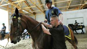Saratoga Springs Officer John Sesselman, riding Jupiter, demonstrates with State Park Officer Zachary Voegler how to make an arrest on horseback during equine training for horse patrols on Wednesday, May 27, 2015, at Upstate Equine Medical Center, in Northumberland, N.Y. (Cindy Schultz / Times Union)
