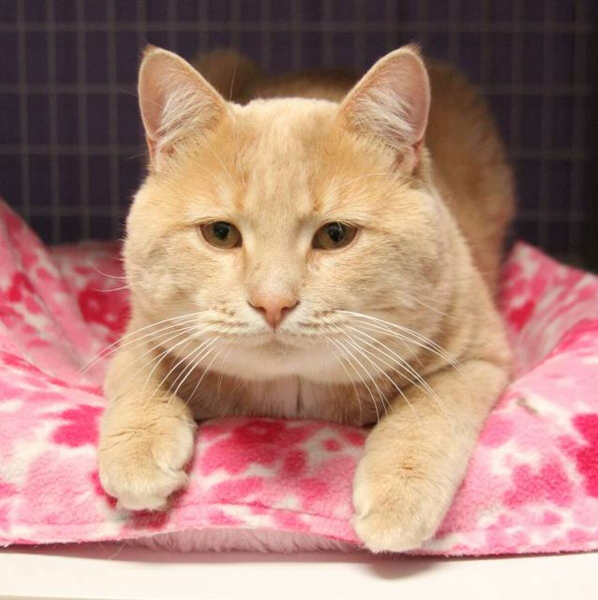 Sully is a sweet and affectionate boy. (Mary Lou Baker)