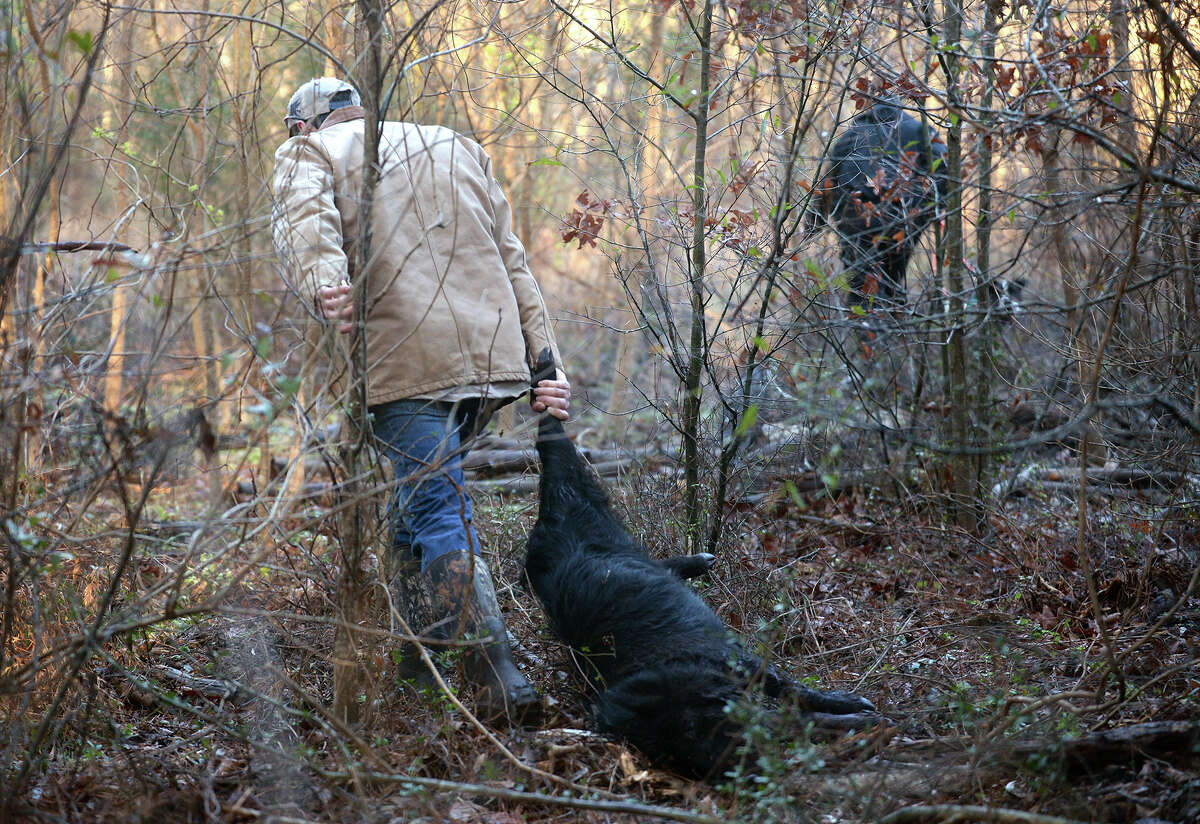 Bruce Perdue hauls a wild hogs while hunting hog in Newton County on Thursday. Photo taken Thursday, February 17, 2017 Guiseppe Barranco/The Enterprise
