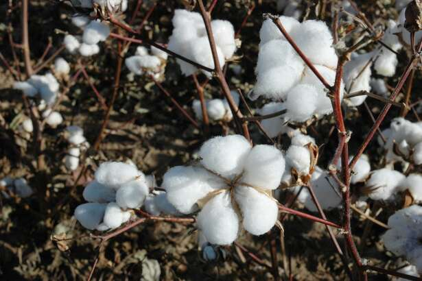 The price of cotton right now is good and that is stimulating increased interest in the High Plains.