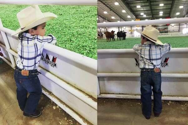 San Antonio Stock Show Amp Rodeo Mysanantonio Com San