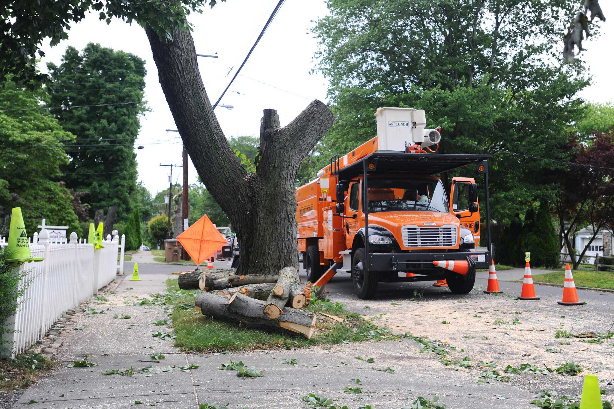 Eversouce extensive tree trimming in fairfield county for Swanson s fish market