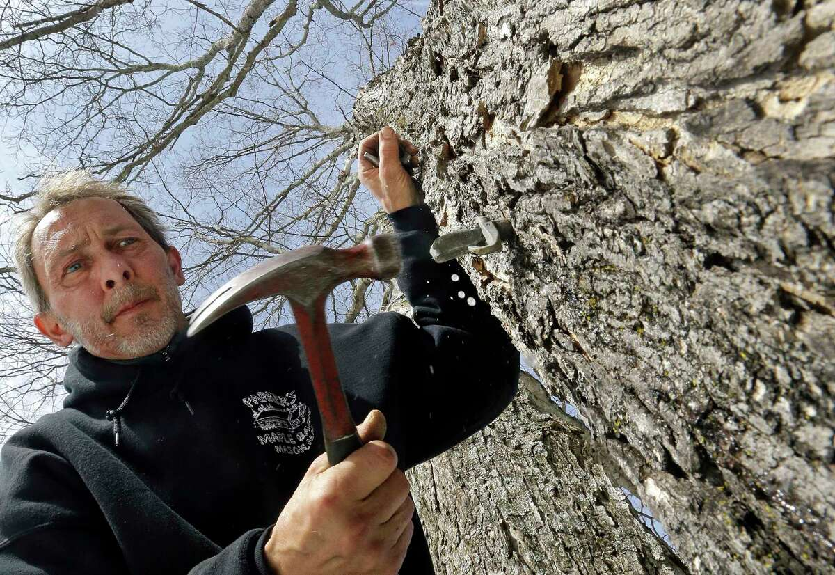Parker's Maple Barn employee Jon Jonis taps a maple tree, Tuesday, Feb. 21, 2017, in Brookline, N.H. Sen. Maggie Hassan, D-NH, led a discussion with maple syrup producers in New Hampshire about how climate change is impacting their industry. (AP Photo/Elise Amendola) ORG XMIT: NHEA101