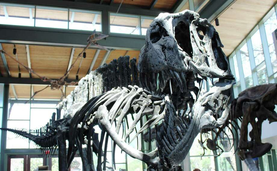Click ahead to go inside The Witte after its $1-million transformation.The Valero Great Hall features a skeletal rendering of an Acrocanthosaurus, a carnivore 11 feet tall and 38 feet long that roamed what would become Texas 110 million years ago. Photo: Luke Whyte / San Antonio Express-News