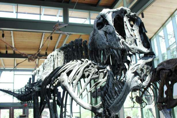 The Valero Great Hall features a skeletal rendering of an Acrocanthosaurus, a carnivore 11 feet tall and 38 feet long that roamed what would become Texas 110 million years ago.