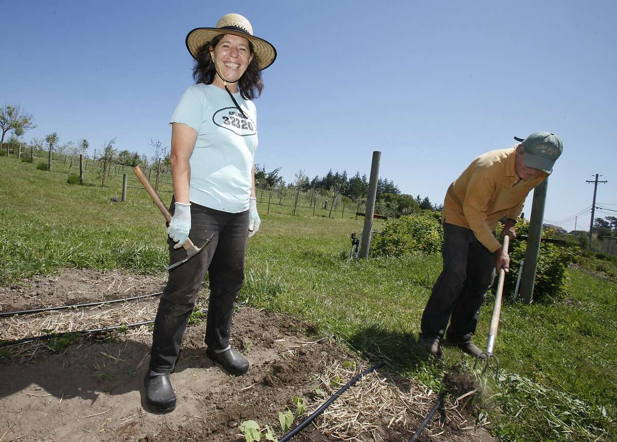 Bette Kroening (left) and her husband Manfred (right) are busy planting and pulling weeds on their property Thursday May 13, 2010. Bette Kroening, who runs the popular Bette's Oceanview Diner in Berkeley, Calif., is now farming a 5 acre ranch near Sebastapol, Calif. with her husband Manfred.