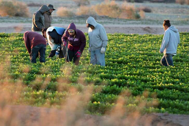 Temporary agricultural workers tend a farm in the early morning last week in Weldon, Arizona, near the U.S.-Mexico border. A recent paper issued by the National Bureau of Economic Research found that the millions of unauthorized workers in the U.S. contribute about 3 percent of private-sector gross domestic. At an average of $500 billion in output a year, removing all such immigrants would be like lopping off the equivalent of Massachusetts from the U.S. economy, said study co-author Francesc Ortega.