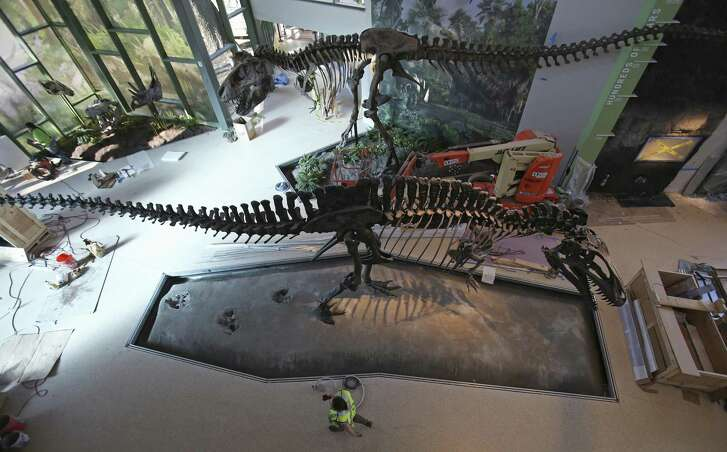 Workers walk by replicas of an Acrocanthosaurus atokensis, bottom, and a Tyrannosaurus rex in the Naylor Family Dinosaur Gallery at the Witte Museum.