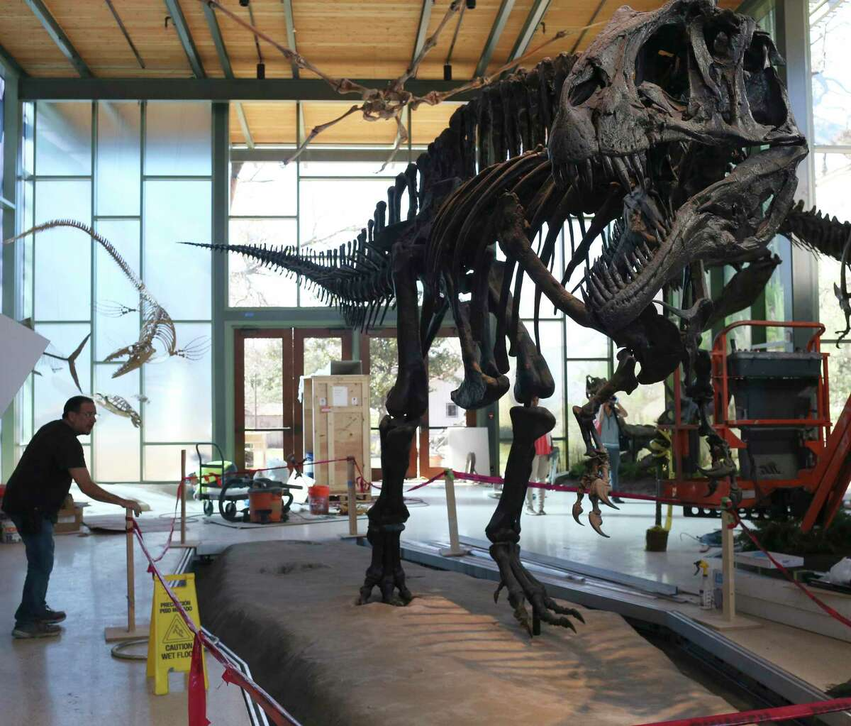 Workers remove tape from around the Acrocanthosaurus exhibit at the Witte Museum in 2017. Footprints of the dinosaur were found in Government Canyon State Natural Area.