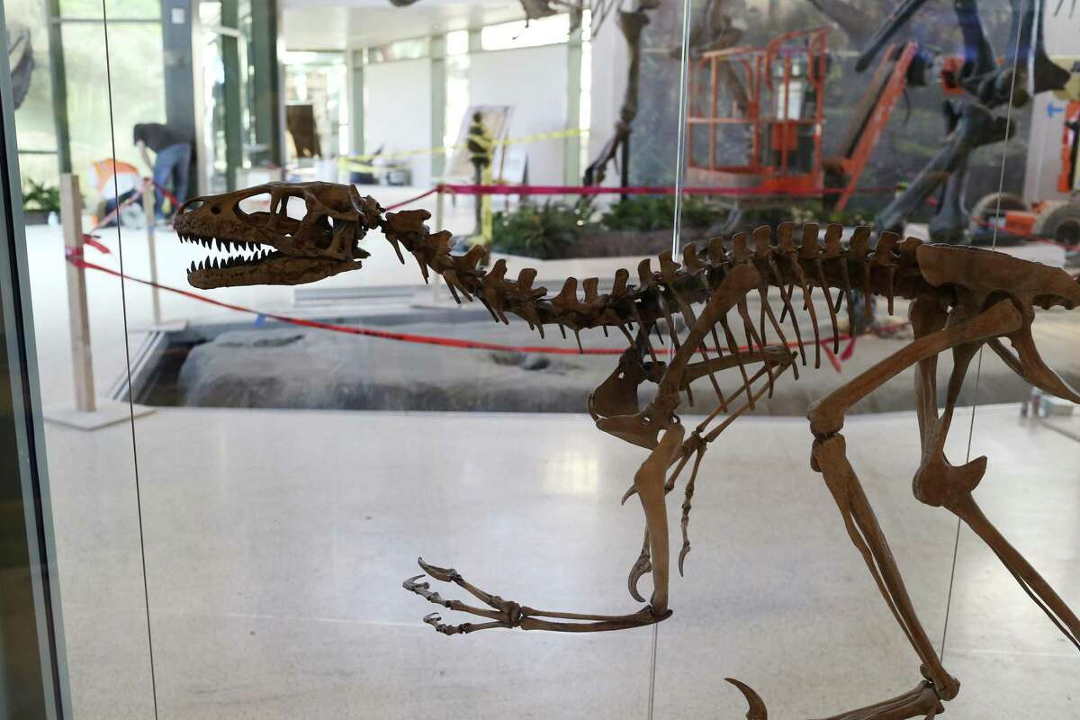 Dinosaur skeleton replicas are part of the Naylor Family Dinosaur Gallery and Dinosaur Lab at the Witte Museum, Tuesday, Feb. 21, 2017.